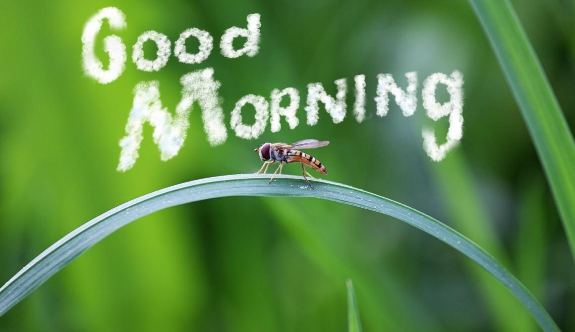 morning-795378_1920