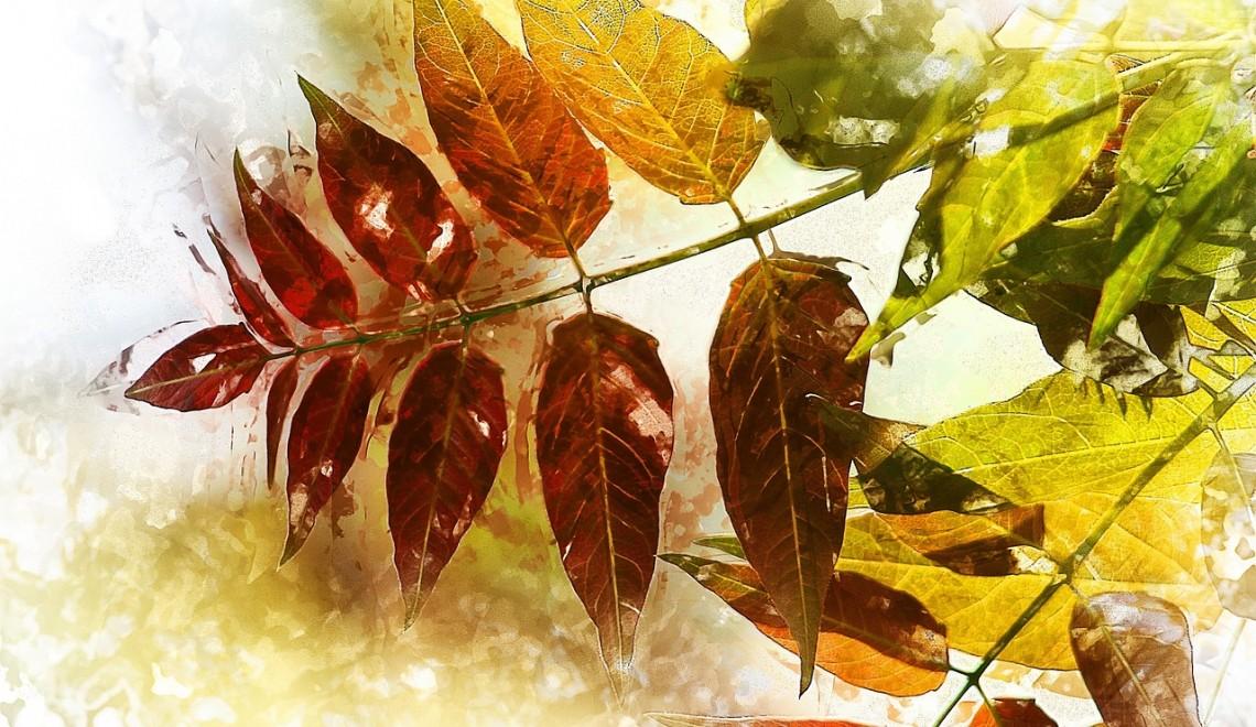 foliage-1067697_1280
